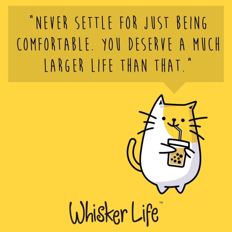 Quote from Ryko, the Founder of Whisker Life